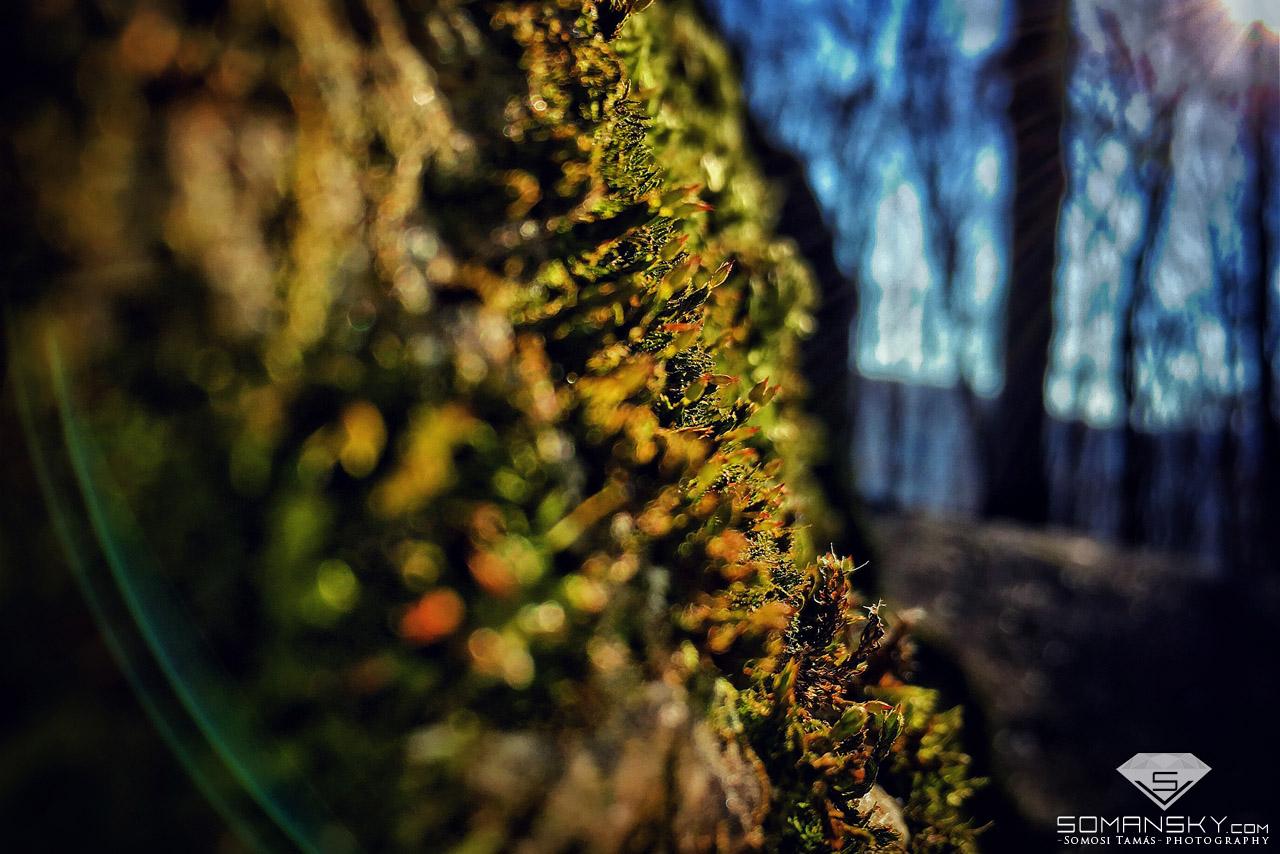 Alkotói képek - Természet és táj fotók